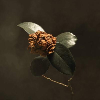 St. Paul & The Broken Bones - Young Sick Camellia (2018)